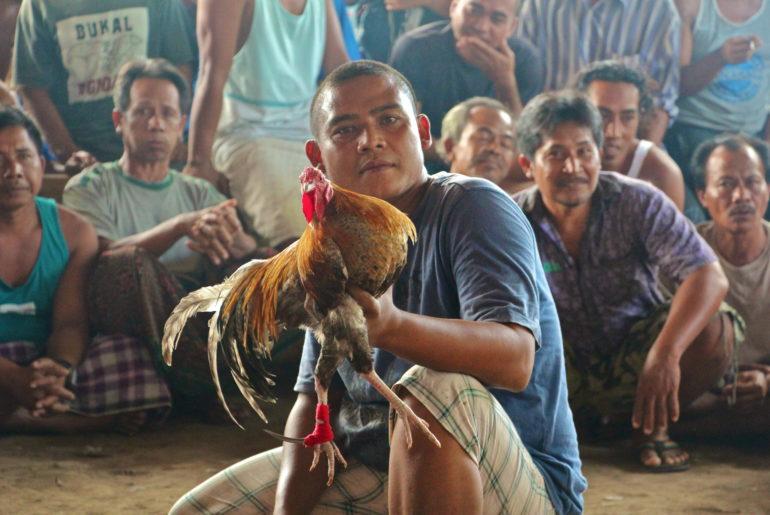 8 activités touristiques avec des animaux à bannir en voyage